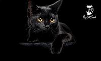 Сухие корма для котов