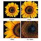 Макрокільця автофокусные для фотокамер FujiFilm (байонет FX) Mcoplus EXT-FX-M (10+21mm), фото 5