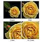 Макрокільця автофокусные для фотокамер FujiFilm (байонет FX) Mcoplus EXT-FX-M (10+21mm), фото 6