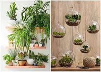 Шкідники кімнатних рослин