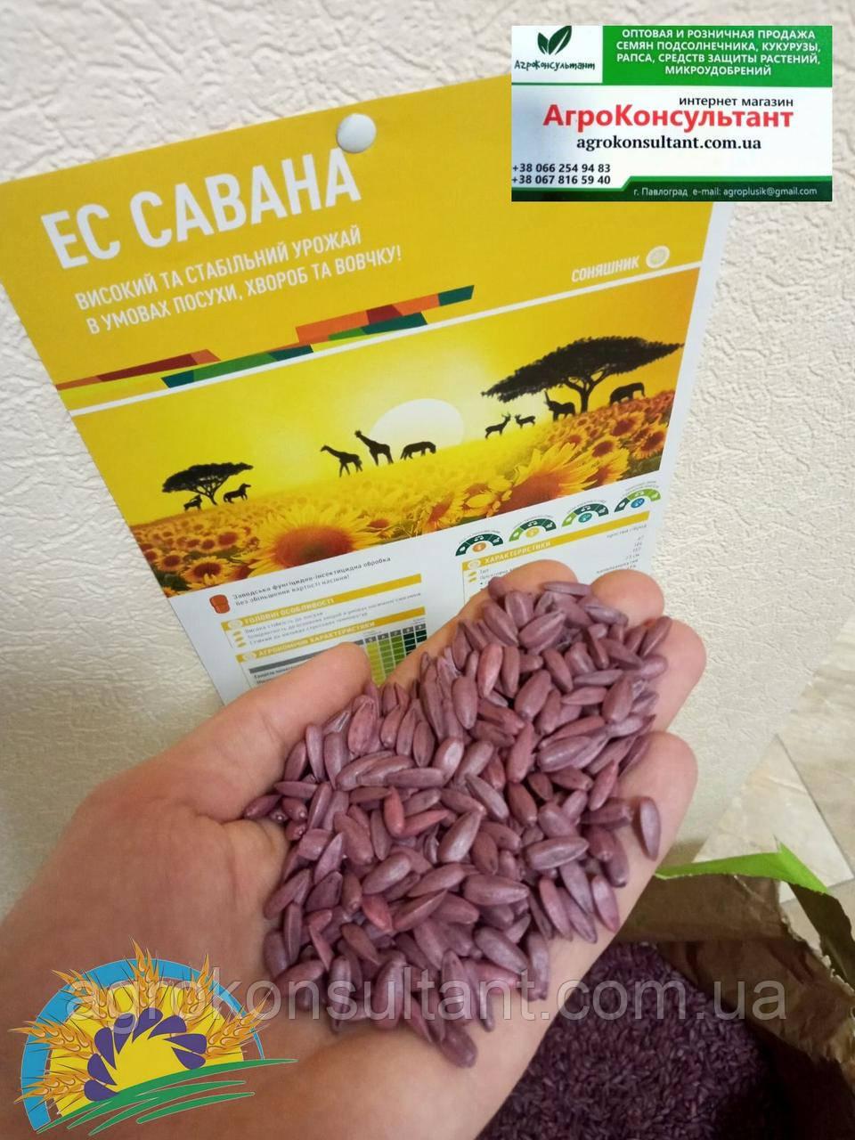 ЕС Савана (урожай 2020 года, Украина) 12,3 кг - семена подсолнечника (150000 шт). Euralis