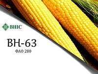 Семена кукурузы ВН 63 ВНІС ФАО - 280, кукуруза ВН 63 среднеранний простой гибрид