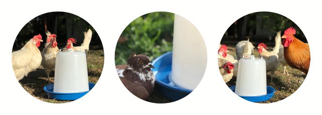 купить поилку для птиц
