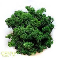 Стабилизированный мох Green Ecco Moss cкандинавский мох ягель Dark Green 1 кг, фото 1