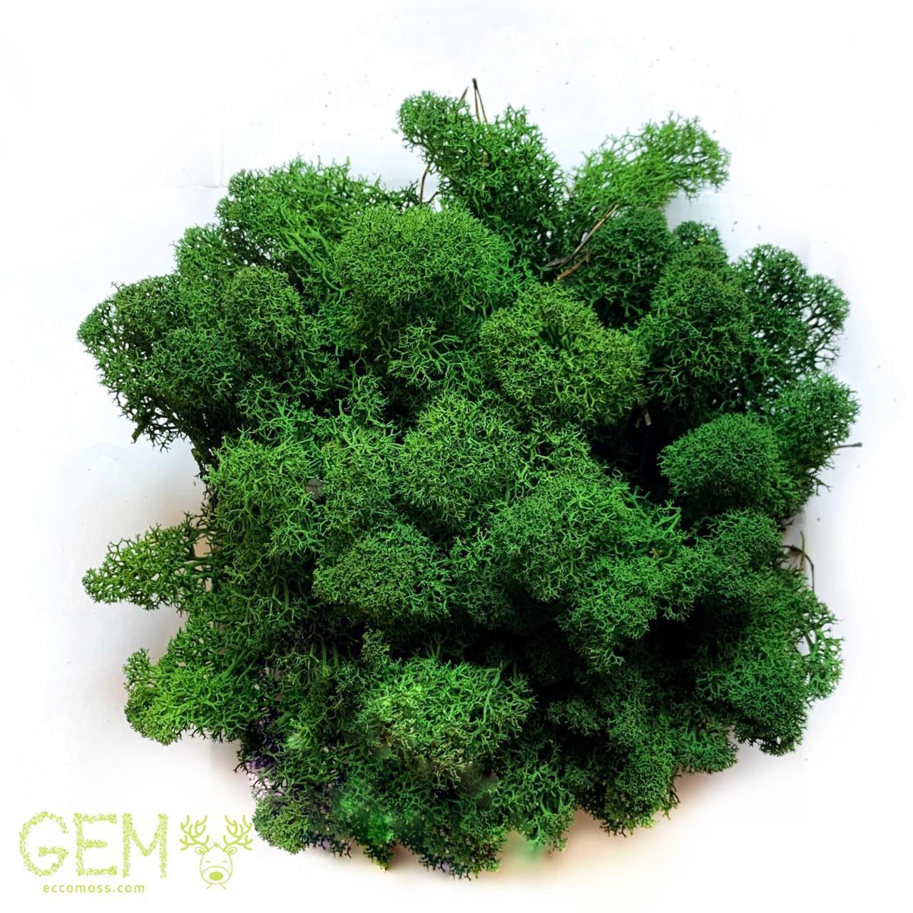 Очищений стабилизированный мох Green Ecco Moss cкандинавский мох ягель Dark Green 4 кг