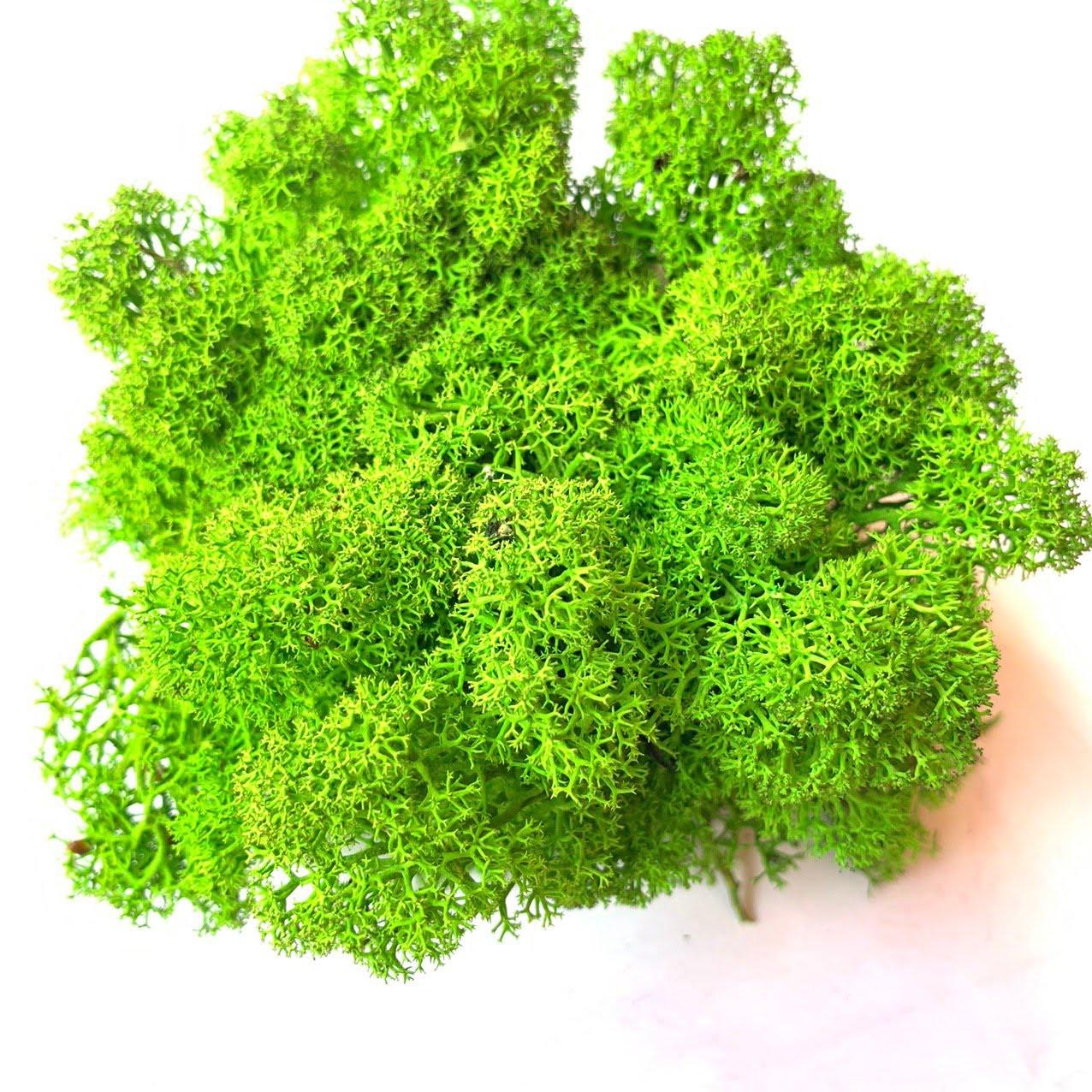 Очищений стабилизированный мох  Green Ecco Moss cкандинавский мох ягель Apple Green 0.5 кг