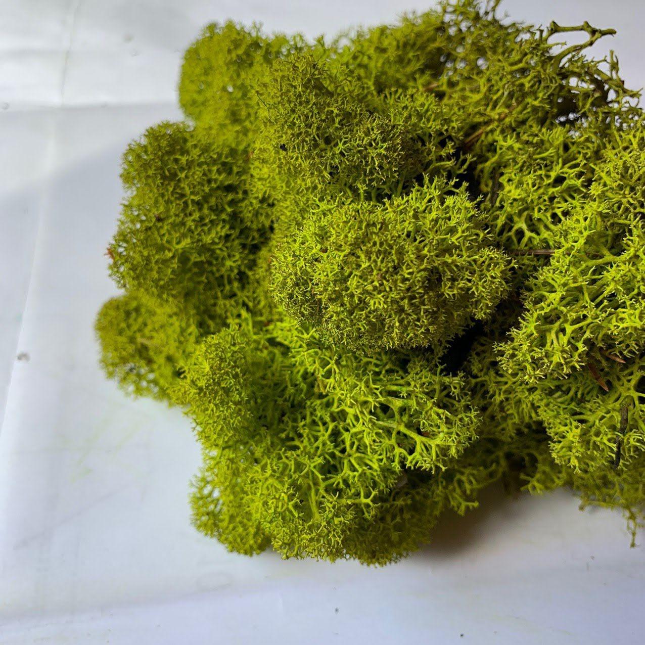 Очищений стабилизированный мох Green Ecco Moss скандинавский мох ягель Medium 0.5  кг
