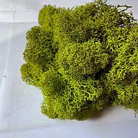 Очищений стабилизированный мох Green Ecco Moss скандинавский мох ягель Medium 1 кг, фото 1