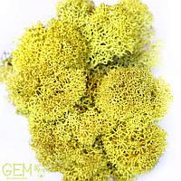 Очищений стабилизированный мох Grren Ecco Moss ягель норвежский желтый 4 кг