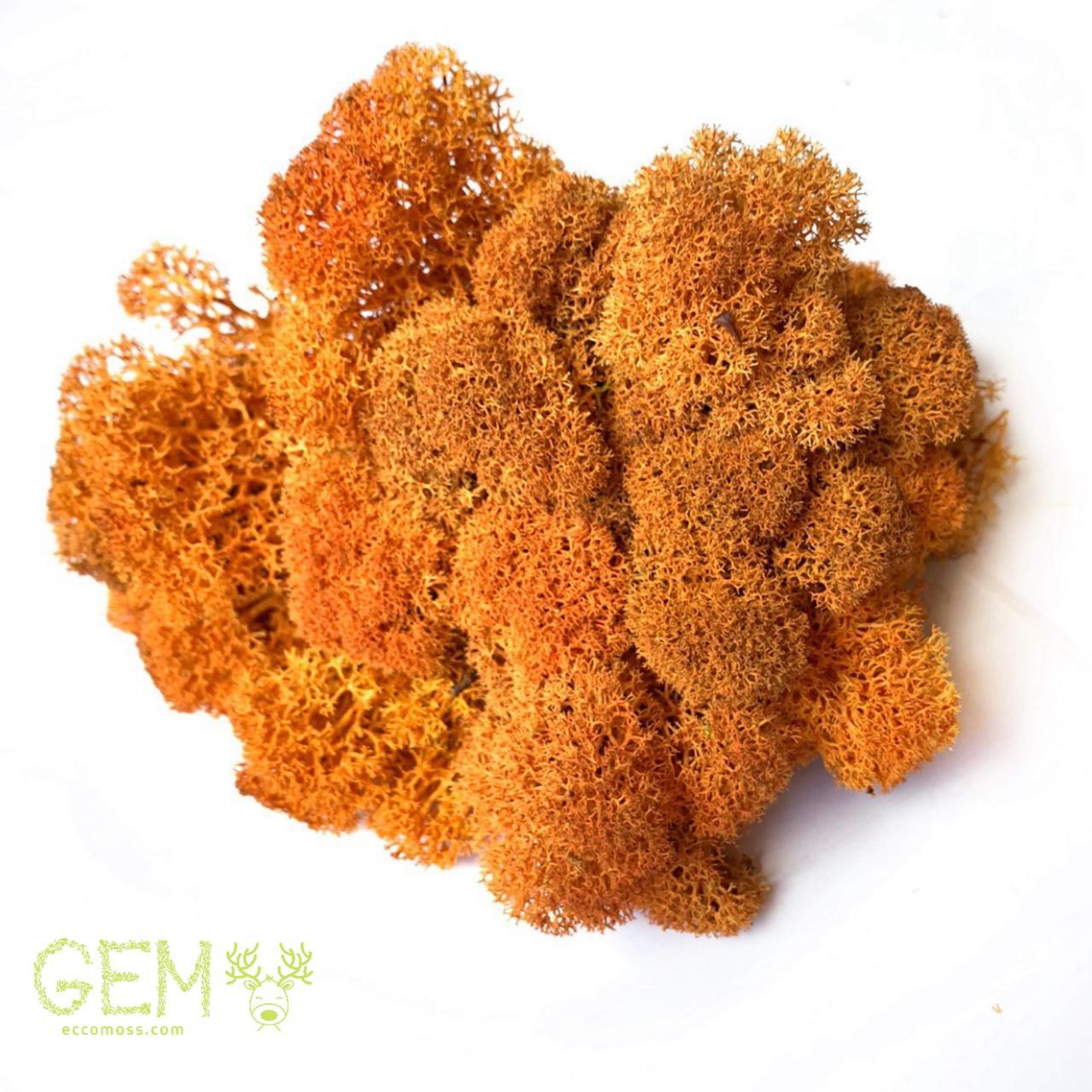 Очищений стабилизированный мох  Green Ecco Moss cкандинавский ягель оранжевый 1 кг