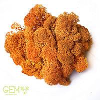 Очищений стабилизированный мох  Green Ecco Moss cкандинавский ягель оранжевый 1 кг, фото 1