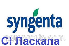 Гібрид соняшнику СІ Ласкала A-G+ (Syngenta)