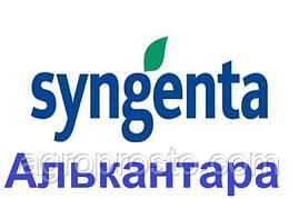 Гібрид соняшнику Алькантара A-G+ (Syngenta)