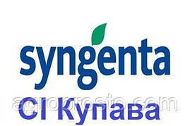 Гібрид соняшнику СІ Купава A-G+ (Syngenta)