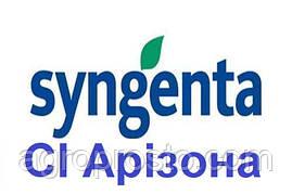 Гібрид соняшнику СІ Арізона A-F+ (Syngenta)