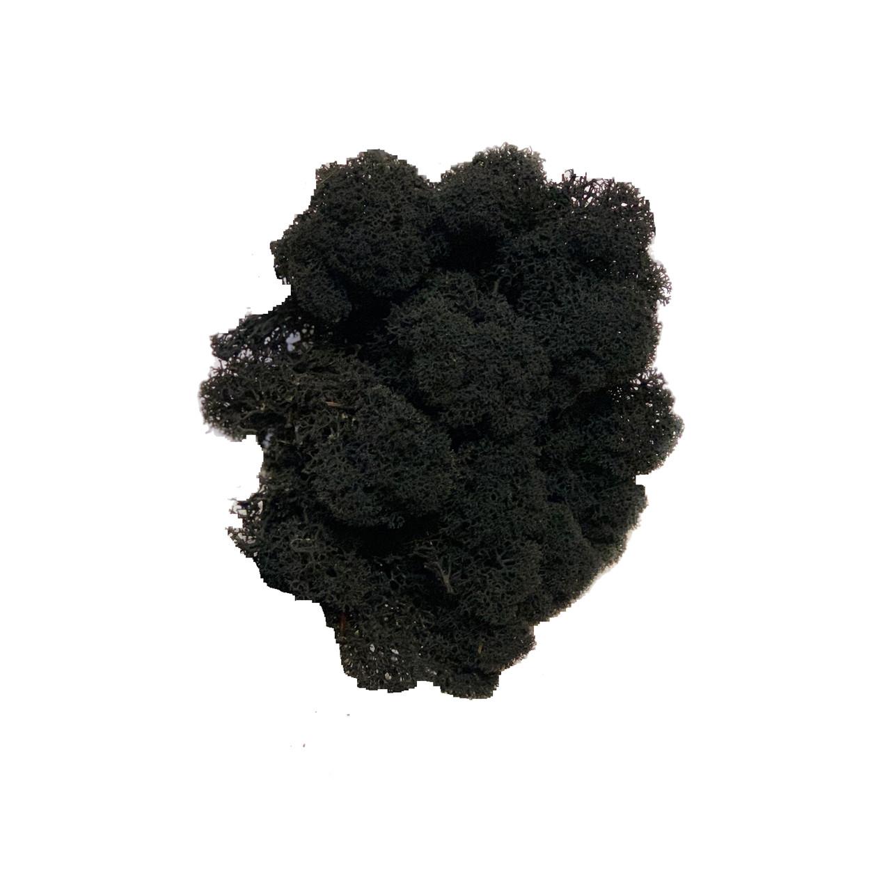 Очищений стабилизированный мох Green Ecco Moss cкандинавский ягель Black 1 кг
