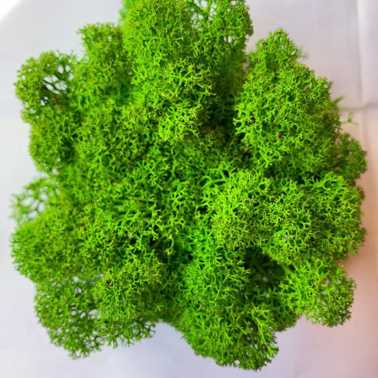 Очищений стабилизированный мох Green Ecco Moss cкандинавский мох ягель Light Green  0.5 кг