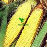 Семена Кукурузы ХОТИН (ФАО 250) фр.2,3 2020 г.у. Союзагротрейд, фото 6