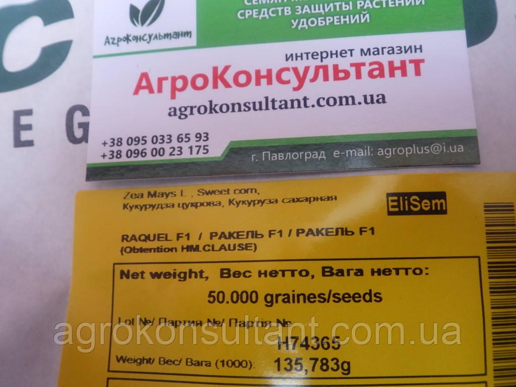 Семена кукурузы РАКЕЛЬ F1 / RAKEL F1 - упаковка 50 000 семян Кукуруза Сахарная, Clause