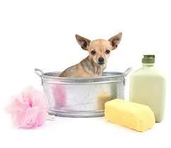 Догляд і гігієна за тваринами