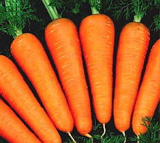 Абако F1 семена морковки, 400 семян — раняя морковь, Seminis, фото 3