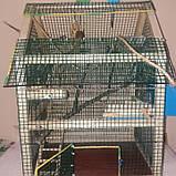 Клетка для попугая, фото 4