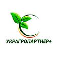 КУКУРУЗА  ДМС 1915 (ФАО - 190)  (МАИС Синельниково), фото 10