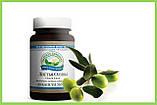Экстракт листьев оливы, Nsp. Olive Leaf Extract Экстракт Листьев Оливы НСП. Натуральная Биодобавка, фото 2