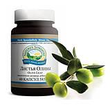 Экстракт листьев оливы, Nsp. Olive Leaf Extract Экстракт Листьев Оливы НСП. Натуральная Биодобавка, фото 4
