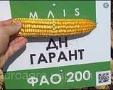 Насіння кукурудзи, Марсер, семена кукурузи, фото 4