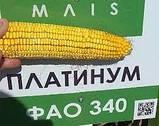 Насіння кукурудзи, Платинум, насіння кукурудзи, фото 7