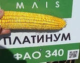 Насіння кукурудзи, Платинум, семена кукурузи, фото 7