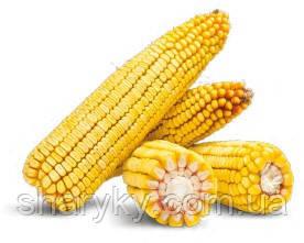 Насіння кукурудзи, Платинум, семена кукурузи