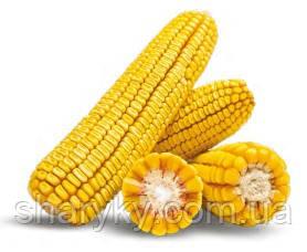 Насіння кукурудзи, ЛГ 30360, семена кукурузи, Лімагрейн