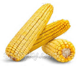 Насіння кукурудзи, Моніка 350, семена кукурузи