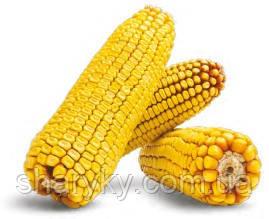 Насіння кукурудзи, Марсер, семена кукурузи