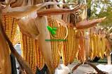 Насіння кукурудзи ДН ГАРАНТ (ФАО 200) 2фр. 2020 р. в. (Маїс Черкаси), фото 3