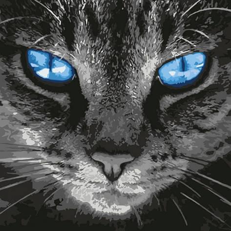 Картина по номерам КНО4177 Пронзительный взгляд, кот 40*40см Идейка, фото 2