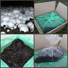 Мицелий и грибные блоки