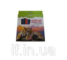 Олівці кольорові 24 кол.KN-55604 (6/120) (КНОПКА) ш.к.4823083103156