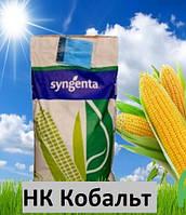 Насіння кукурудзи НК Кобальт Syngenta (ФАО 320)