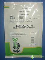 Морковь Канада CANADA F1 25000 с (1,6 - 1,8), фото 1