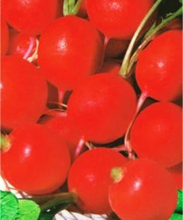 Семена редиса Черри Билл (имп.), фото 2