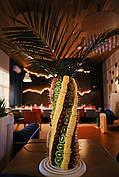 Фруктова пальма з натуральних фруктів 70 см