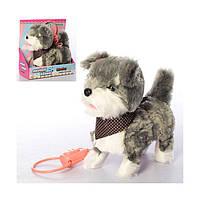 Детская игрушка Собака Музыкальная на дистанционном управлении с поводком 24 см.