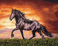 Картина по номерам 40х50см. GX34880 Черный конь Rainbow