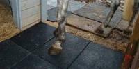 Резиновая плитка для конюшни, резиновая плитка для коровника, резиновое покрытие для собаки в будку.