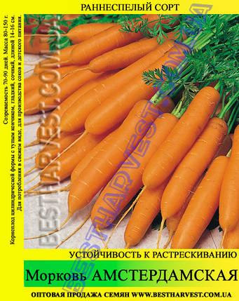 Семена моркови «Амстердамская» 25 кг (мешок), фото 2