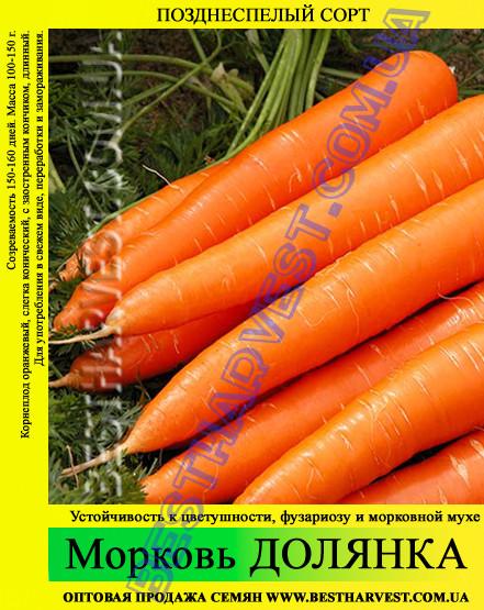 Семена моркови Долянка 1 кг