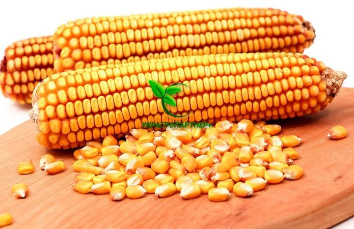 Насіння Кукурудзи ВН 63 ф2. (ФАО 280), ВНІС